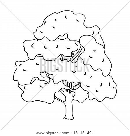 Canadian maple. Canada single icon in outline style vector symbol stock illustration .