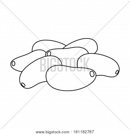 Pine nuts.Different kinds of nuts single icon in outline style vector symbol stock web illustration.