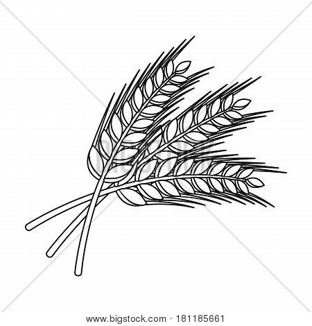Sprigs of wheat. Plant for brewing beer. Pub single icon in outline style vector symbol stock web illustration.