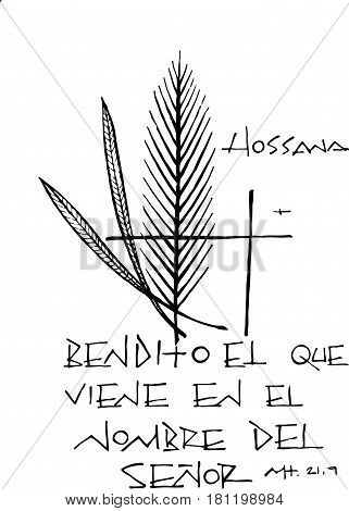 Hand drawn vector illustration or drawing of the phrase in spanish: Bendito el que viene en el nombre del Señor which means: Blessed is the one who comes in the name of the Lord