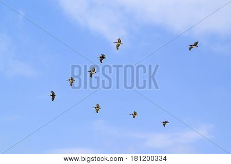 Birds Flying In V Formation In Tulum
