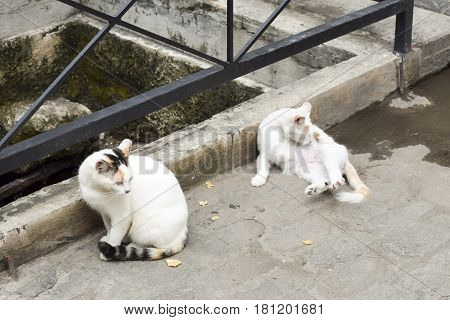 Stray Cats On The Street In Tenerife