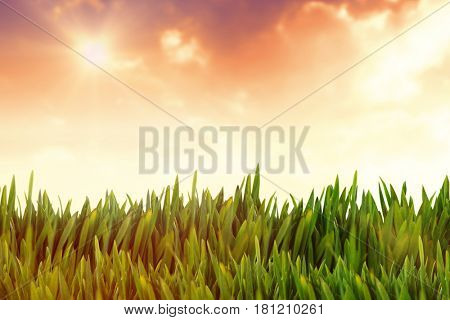 Grass growing outdoors against sunset with clouds