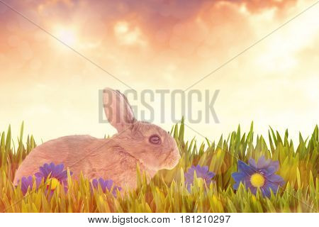 Side view of cute brown rabbit against sunset with clouds