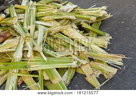 Sugarcane bagasse nature fiber recycle for biofuel pulp and building materials.