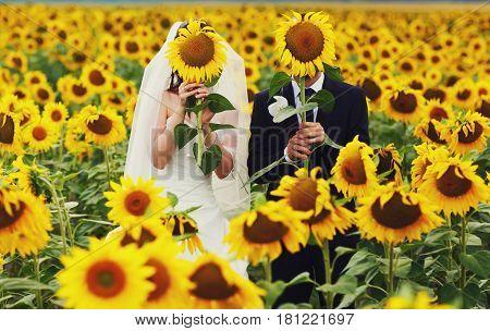 Newlyweds stand hidden behind the big sunflowers