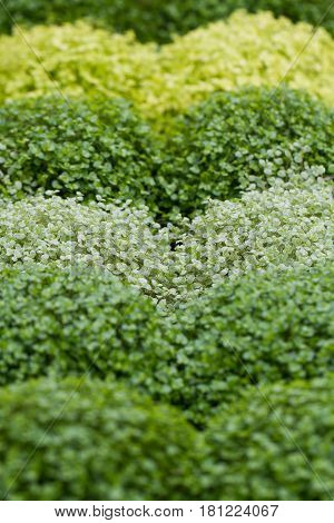 Shades of green grass and plants in an undulating gardening background.