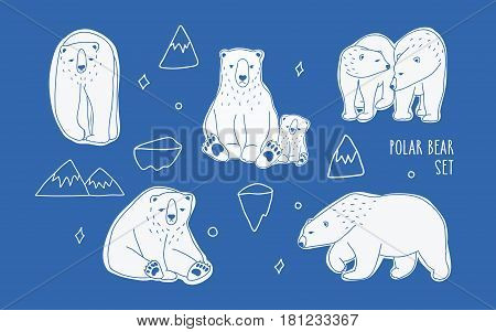 Set with different white polar bears. Hand drawn, doodle vector collection