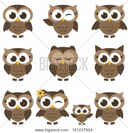 set of brown owls and owlets isolated on white