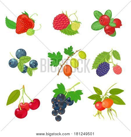 Berries isolated set icon on white background. Vector illustration with strawberry, cherry, blackberry, raspberry, cranberry