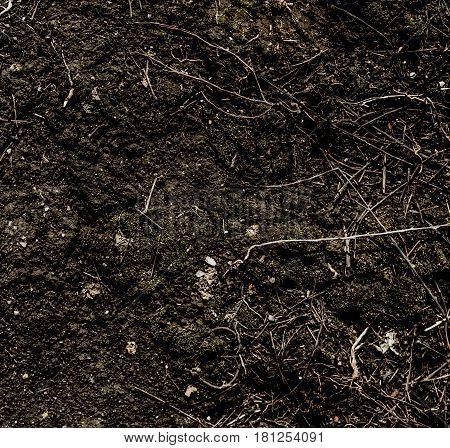 Soil, soil background, soil texture, nature background. Abstract soil background. Soil closeup.