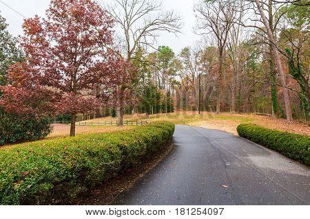 Asphalt road in autumn Lullwater Park Atlanta USA