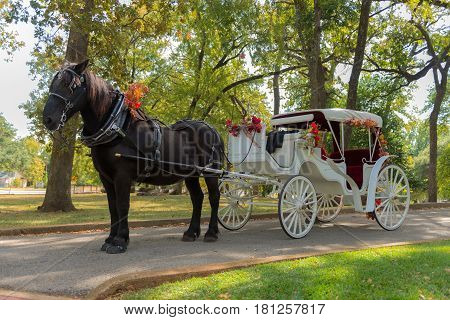 Horse And Carriage Ride In A Forest