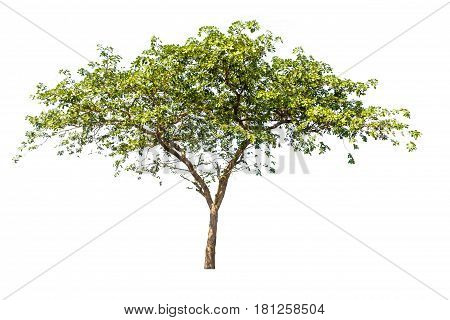 tree isolated tree on white background tree object.