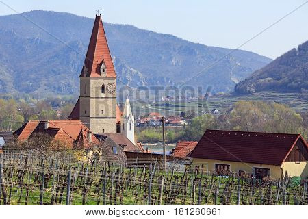 Church of the Assumption of the Virgin Mary (german: Wehrkirche Maria Himmelfahrt) in town of Weissenkirchen in der Wachau with vineyards in the foreground. District of Krems-Land, Lower Austria.