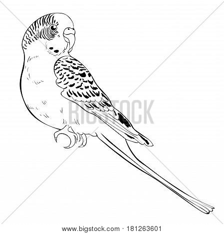 Coloring With Cute Wavy Parrot  Vector Illustration