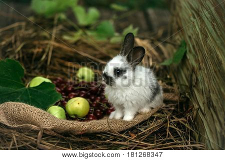 Cute Rabbit Sitting With Red Cherry Berries And Green Apples