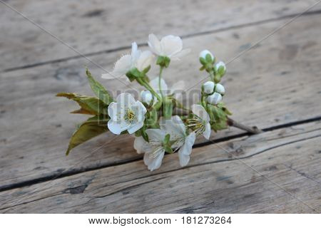 Cherry flowers on a branch against a background of boards