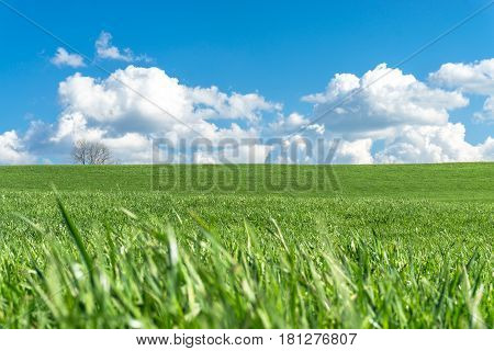 Green grassy meadow on a clear day. Natural eco background with a bright blue sky, white clouds, green grass and a tree. A lot to copyspace area. Environment or season concept.