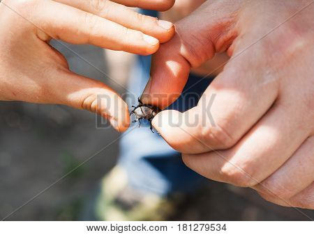 A man in his hand holds a deer beetle. A child's hand touches the horns.