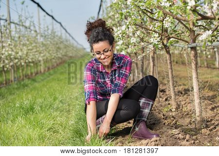 Farmer Girl Weeding Around Fruit Trees