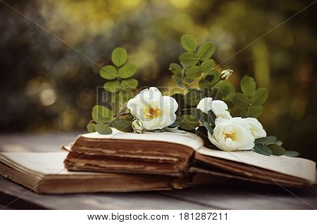 Dogrose and open old books on a wooden table
