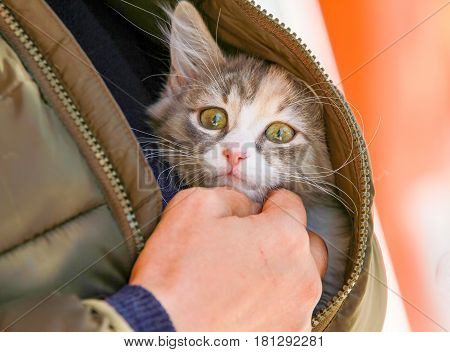 Cat in the lap cute kitten meow