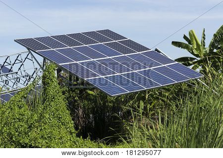 Solar Cell Pannel in green plant area with blue sky background