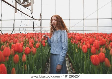 Redhead girl looking down while standing between red tulips in orangery