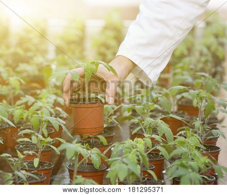 Scientist Holding Sprout In Flower Pot