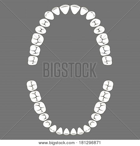 chewing surface of human teeth upper and lower jaw, vector tooth for dental clinic