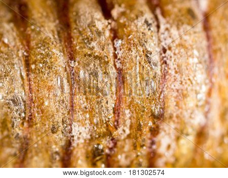 insect pupa as a background. macro . A photo