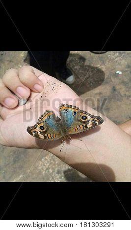 Mariposa posada en brazo , tiene alas grandes y hermosas