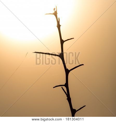Dry prickly plant on the sunset background .