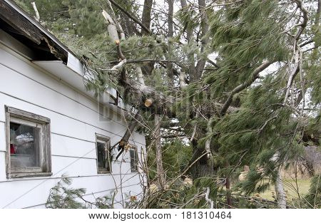 Tree fallen on a house caused tornado and wind storm roof damage
