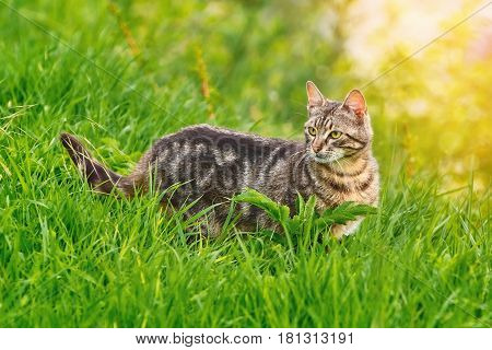 A Mongrel Cat in the Green Grass