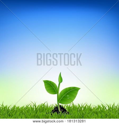 Green Grass With Young Plant
