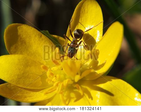 Extreme close up of flower head and ant