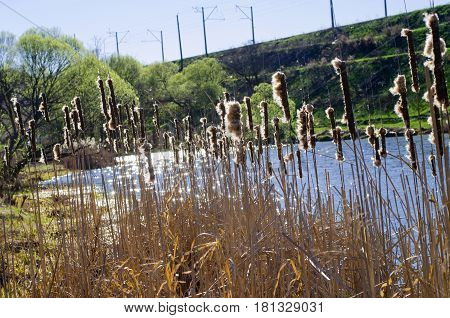 Reeds over the water on a springy sunny day