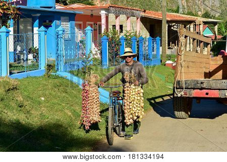 Vinales, Cuba - January 11, 2017: Street vendor selling onions and garlic in Vinales, Cuba.