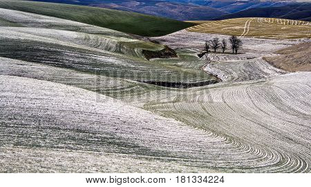 Rolling Farm Fields Covered in Snow on the Palouse in Washington State