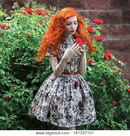 Red roses. A woman with red curly hair in a floral dress on a background of a bush with red roses. Red-haired girl with pale skin blue eyes bright unusual appearance and red lips and thin waist in the roses garden. Roses flowers