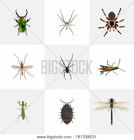 Realistic Gnat, Locust, Tarantula And Other Vector Elements. Set Of Hexapod Realistic Symbols Also Includes Damselfly, Alive, Dragonfly Objects.