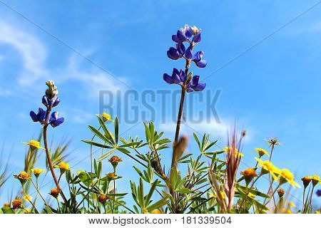 Beautiful spring wild flowers reaching toward the sun against a blue sky.