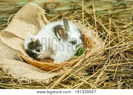 Cute Small Rabbit And Little Cat Lying On Natural Hay