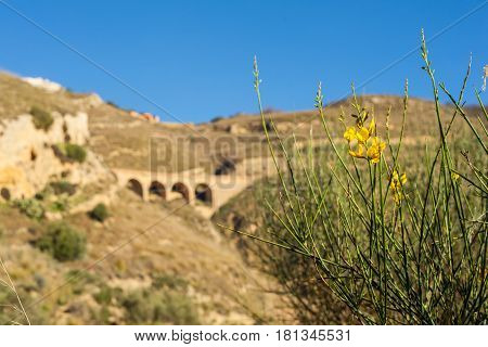 View of the broom plant in the sicilian countryside