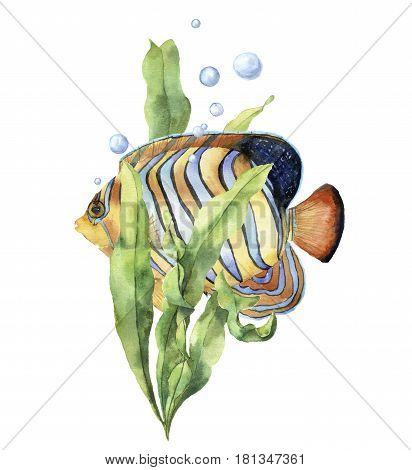Watercolor aquarium card with fish. Hand painted underwater print with angelfish, laminaria branch and air bubbles isolated on white background. Illustration