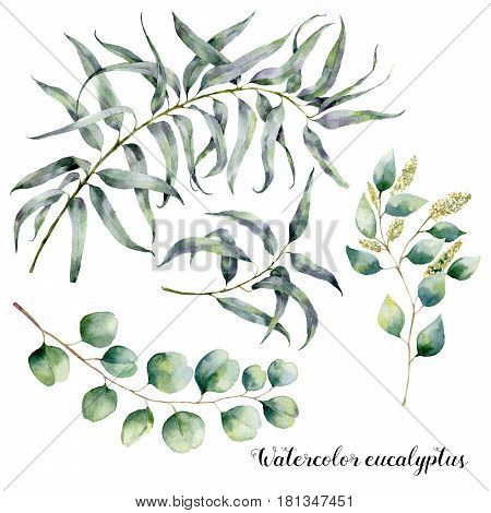 Watercolor set with eucalyptus branch. Hand painted floral illustration with leaves and branches of seeded and silver dollar eucalyptus isolated on white background.