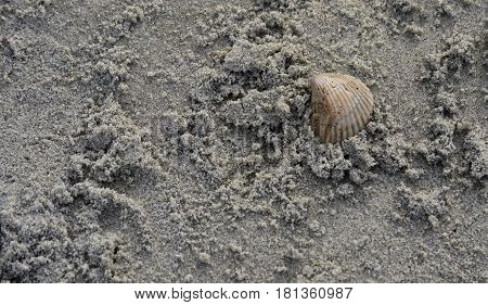 scallop shell on the right of beach sand