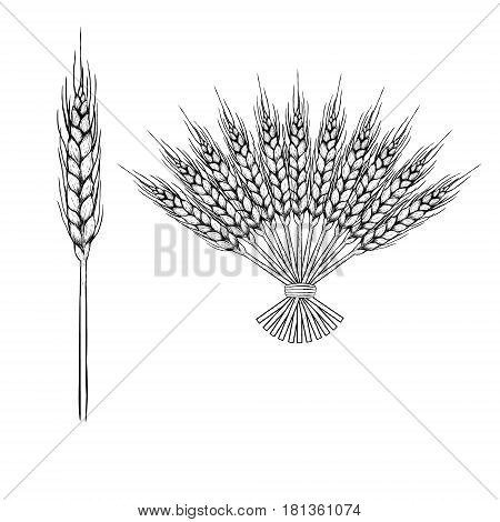 Hand drawn set of rye. Drawing spikelets. Bouquet ears. Sketches isolated. Black and white graphic design. Vector illustration.